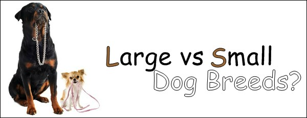 Large vs small dog breeds