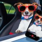 Dog kennels for safety
