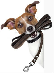 Dog Training Collars & Leashes