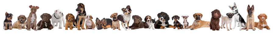 Dog breeds training