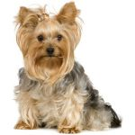 Terrier Dog Breeds